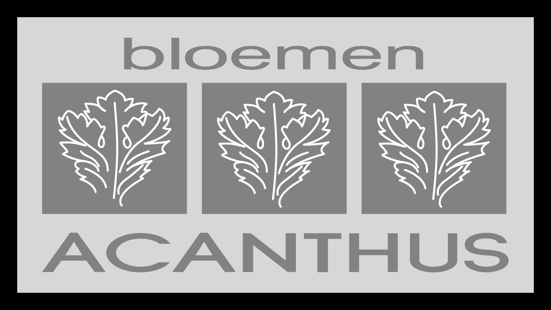 Bloemen Acanthus | Moorslede